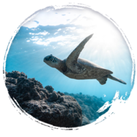 ocean-pollution-environment